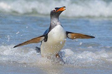 Ezelspinguin (Pygoscelis papua), Falkland Islands. van Beschermingswerk voor aan uw muur