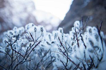 Weiße, flaumige Pflanzen von Ellis Peeters