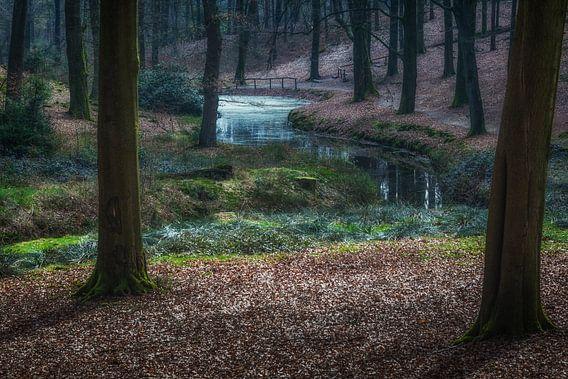 Water in het bos van Tim Abeln