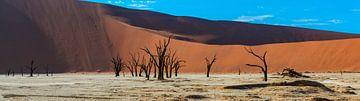 Panoramafoto van de Deadvlei, Namibië van Rietje Bulthuis