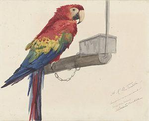 Papagei - A.M.D. Franken. von
