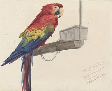 Papagei - A.M.D. Franken.