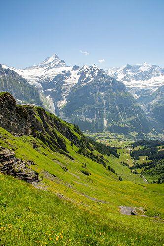 Sommer auf der Grindelwald First Wanderweg mit Schreckhorn in den Berner Alpen in der Schweiz.