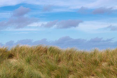 Wad - Helmgras tegen een blauwe lucht van