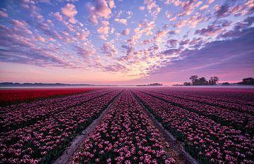 Tulpenveld met prachtige lucht van Peter de Jong