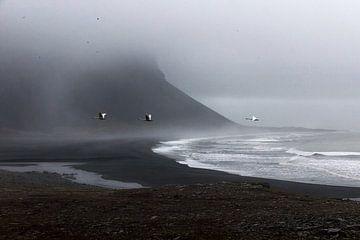 Schwäne an der schwarzen Küste Islands von Nathan Marcusse