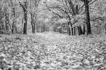 Een laan in een bos in de herfst met gevallen bladeren in zwart-wit van John Quendag