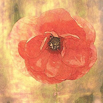 rote Mohnblume (bearbeitet) von Yvonne Blokland