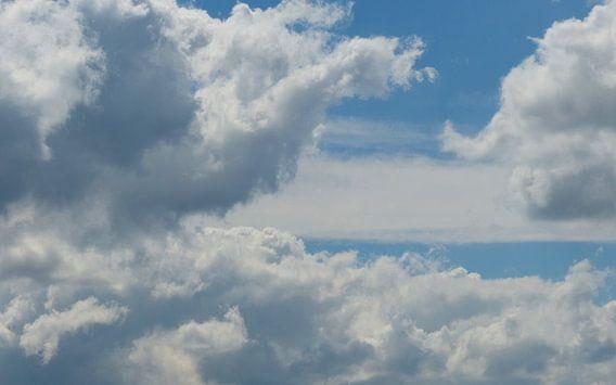 Dutch skies - Nederlandse wolkenlucht van bird bee flower and tree