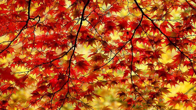 Herfst bladeren van Margaretha Gerritsen