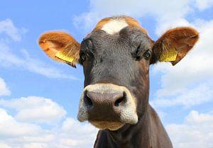Portret koe.