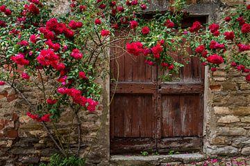Rozen en oude deur in Mombaldone van