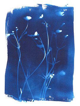 Boterbloemen cyanotype van Karin van der Vegt