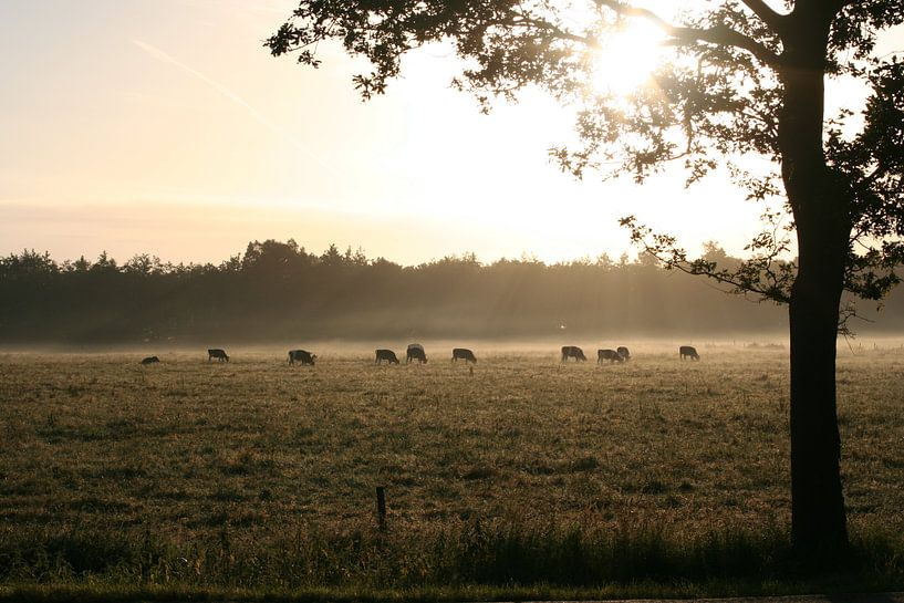Zonnestralen schijnen op grazende koeien van Saskia van den Berg Fotografie