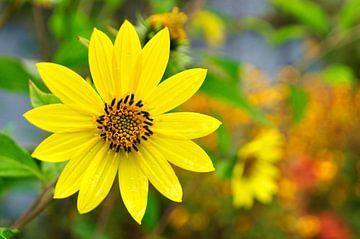 Sonnenblume von Corinne Welp