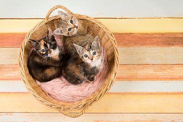 Drie schatjes van Elles Rijsdijk