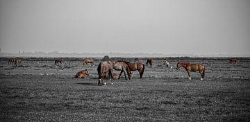 Pferdelandschaft von Micha Papenhuijzen