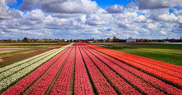 Bloemenvelden met Nederlandse Tulpen van Dutch Creator
