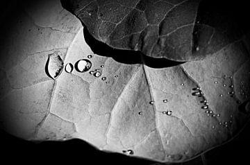 Waterdruppels von Leen Van den Abeele