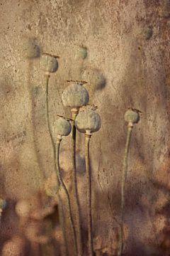 uitgebloeide papavers van Els Fonteine