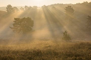 zonnestralen in de mist van
