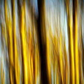 springtime trees von Bernd Hoyen