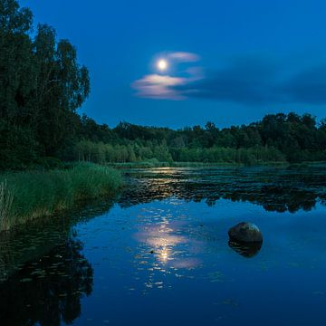 Réflexion de lune sur Lynxs Photography