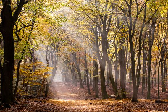Zonnestralen door het herfstbos van Judith Borremans