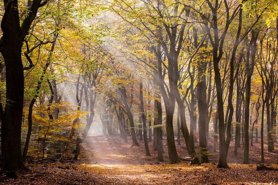 Zonnestralen door het herfstbos