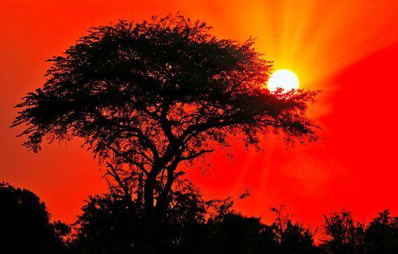 Sonnenaufgang in Afrika, Uganda