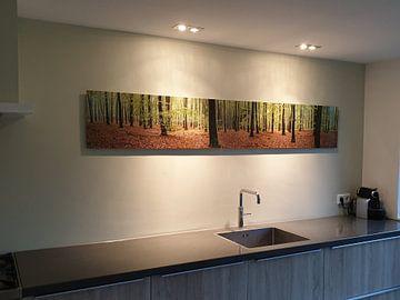 Kundenfoto: Bos panorama von Sjoerd van der Wal