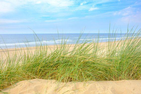 Uitzicht vanaf de duinen op het strand van de Noordzee