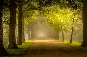 Mistige zonsopkomst in Apeldoorn
