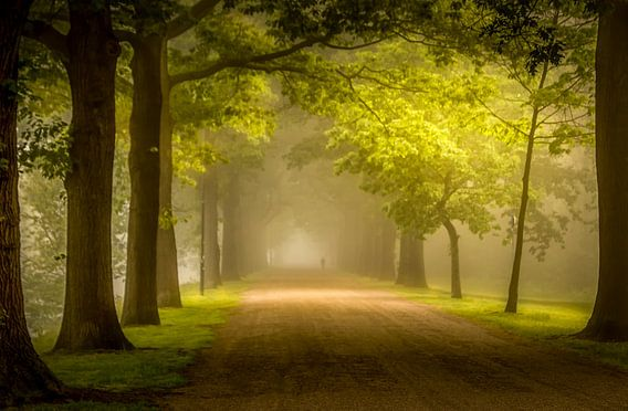 Mistige zonsopkomst in Apeldoorn van Patrick Rodink