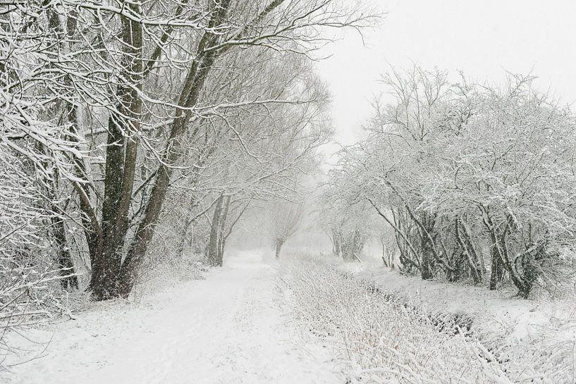 Wintereinbruch am Niederrhein, Schneefall in der Ilvericher Altrheinschlinge, Blick an Wanderweg neb von wunderbare Erde