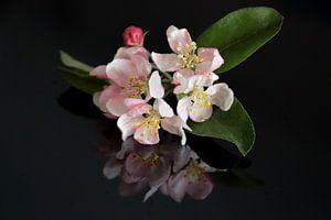 Ornamentale Apfelblüte mit Reflexion in schwarzem Hintergrund von Jasmijn