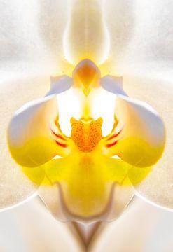 De stamper van een orchidee van Nynke Altenburg