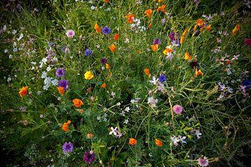Kleurrijke wilde bloemen van Maja Artwork