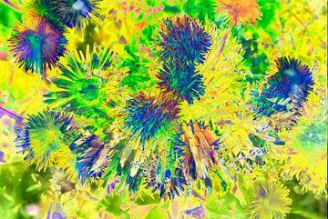 Löwenzahnblüte abstrakt , Makroaufnahme