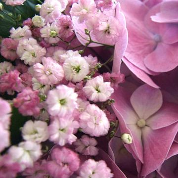 roze gipskruid en hortensia van Nicolet Reus