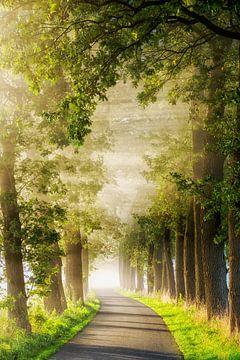 Glänzend von Lars van de Goor