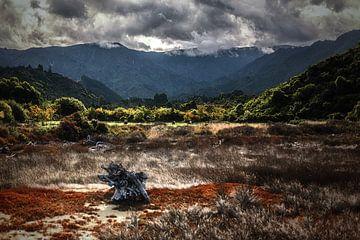Abel Tasman National Park van