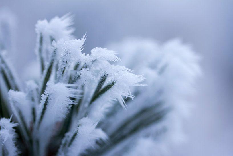 Een wit winterdetail, bevroren plant met ijspegeltjes van Karijn   Fine art Natuur en Reis Fotografie