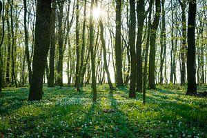 Bos in de lente van Martin Wasilewski