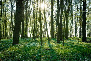 Wald im Frühling von Martin Wasilewski