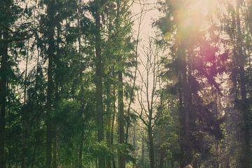 Zonnestralen door de bomen van Loes Huijnen