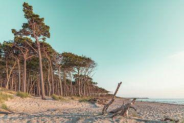 West Beach van Steffen Gierok