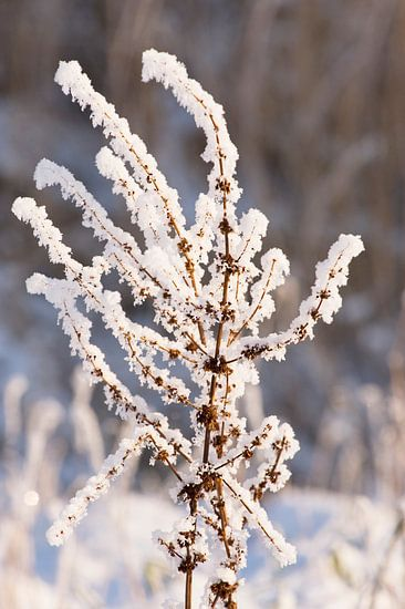 A touch of frost von Brian Morgan