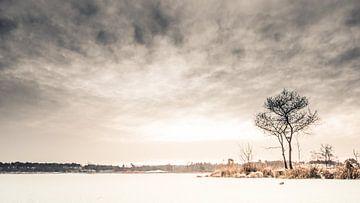Winter in de Overasseltse en Hatertse Vennen.  van