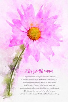 Chrysantheme von Theodor Decker